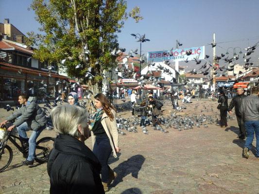 Tauben (Vögel)