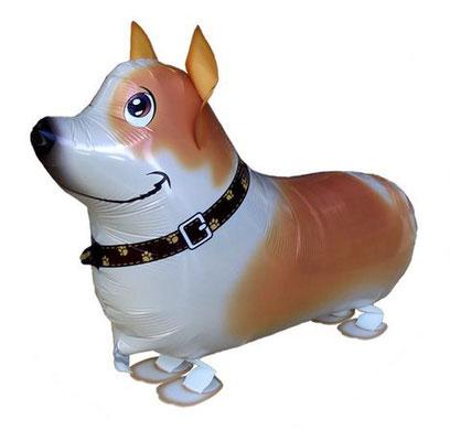 Corgi (Terrier)