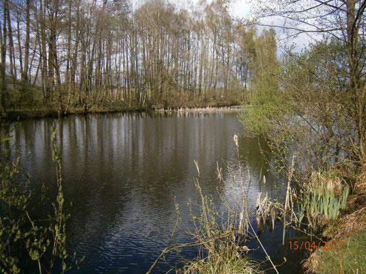 Oberer Altenebstorfer Teich
