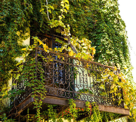 Romantic balcony shaded by ivy and vines
