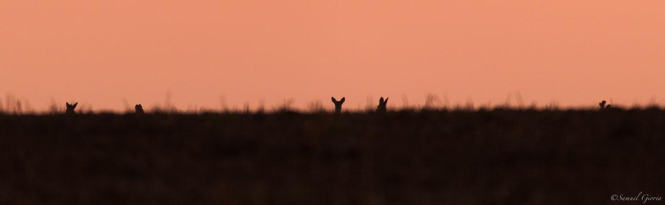Curiosité au soleil couchant