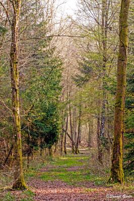 Bois du Der