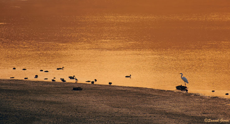 Le Lac du Der dans son écrin doré!!