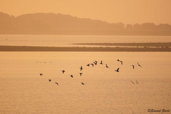 Vol de canards aux aurores!!