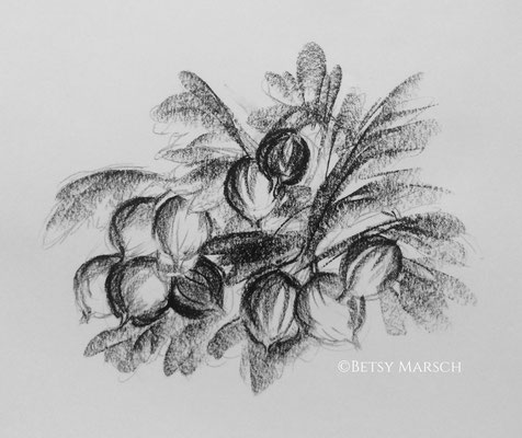 Gooseberries, interior illustration
