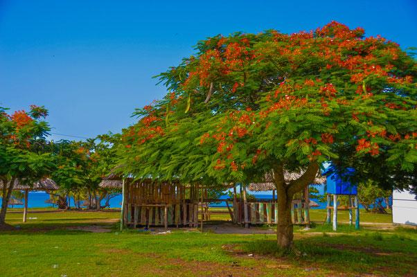 Wunderschöner Baum an verlassenem Strand. In der Nähe von Trinidad.
