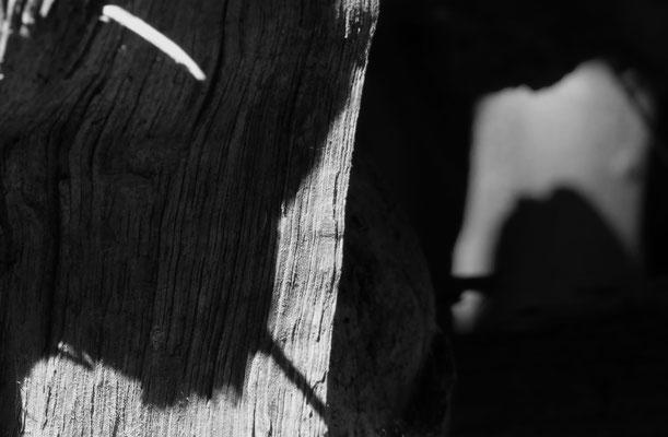 Im Wald. Vor Augen. Licht.