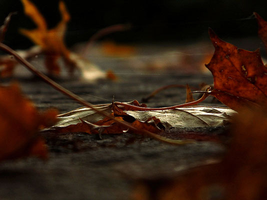 Herbstlichtblick