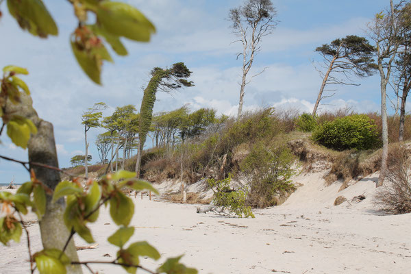 Am Weststrand in Prerow