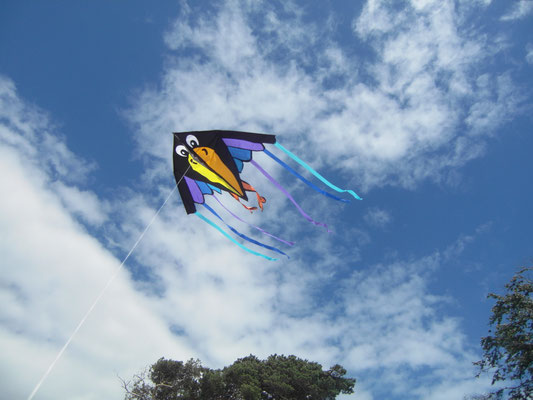 Drachenfliegen am Strand in Prerow