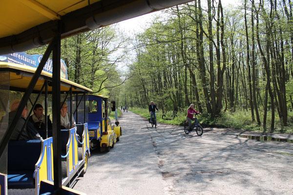 Darßbahn in Prerow