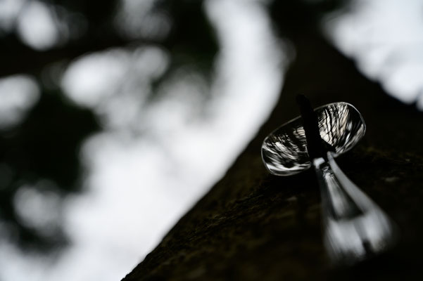tablespoon on forest floor