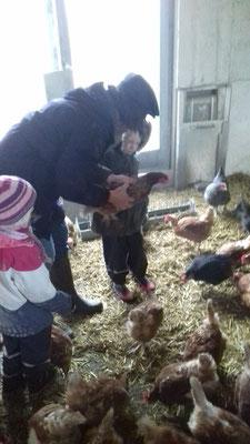 Zu Besuch bei den Hühnern auf dem Scheurenhöfchen