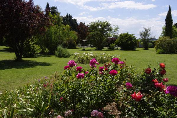 les roses et le parc