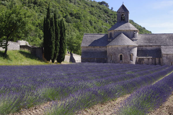the Senanque cistercian abbey