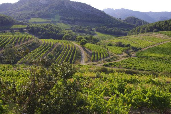 Die Weinbergen zwischen Le Barroux und Lafare