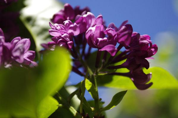 des arbustes de nombreuses variétés
