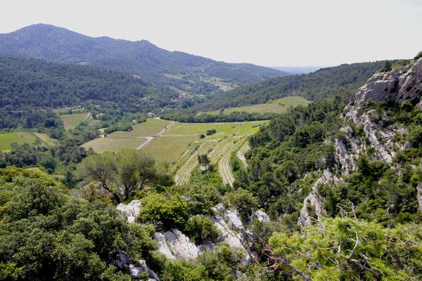 Vue sur les vignes au dessus de Lafare