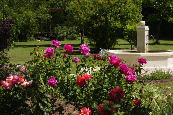 roseraie devant la fontaine provençale