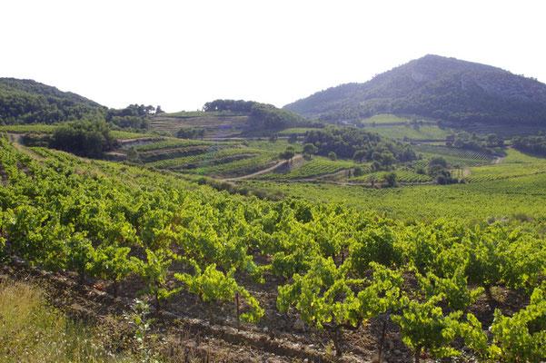 les vignobles à proximité du Baroux