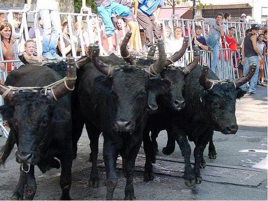 Arles Feria