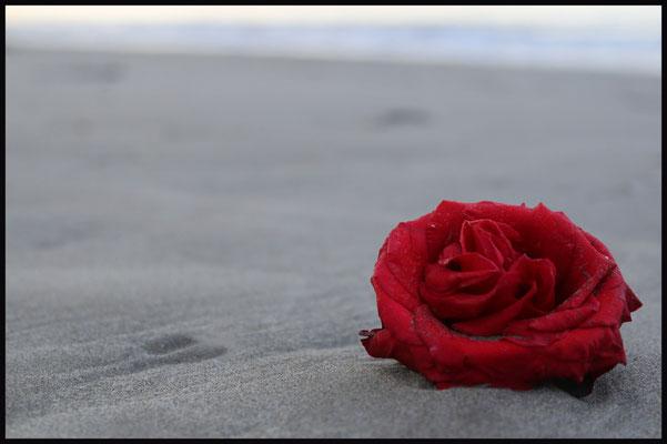 Rose et mer