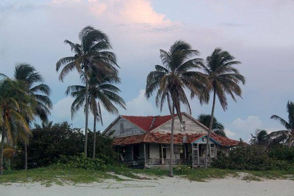 Cuba Varadero palmiers