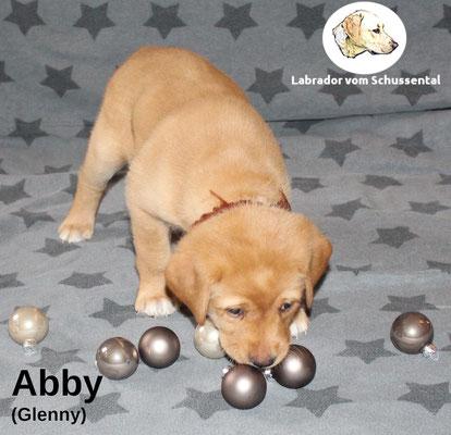 Abby vergeben