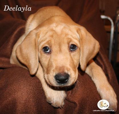 Deelayla / Layla lebt jetzt in München !