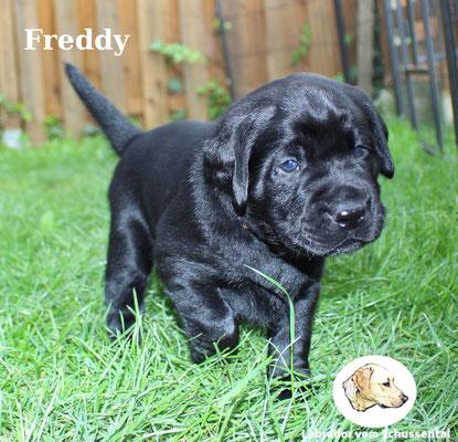 vergeben Freddy/Timmy !