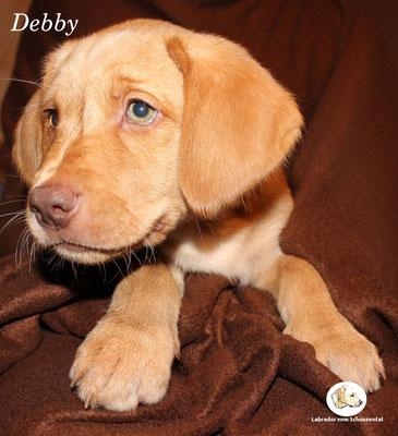 Debby lebt auch in der Schweiz !