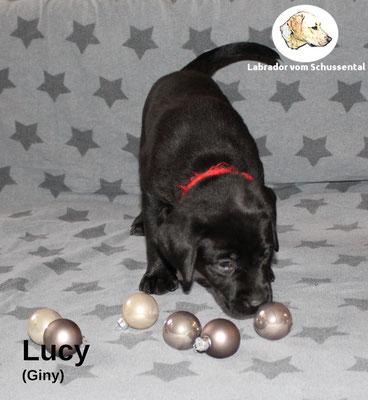 Lucy vergeben