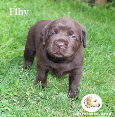 vergeben Fiby !