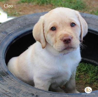 Cleo/Gracie - vergeben