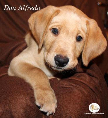 Don Alfredo / Freddy lebt ganz in der Nähe von uns !