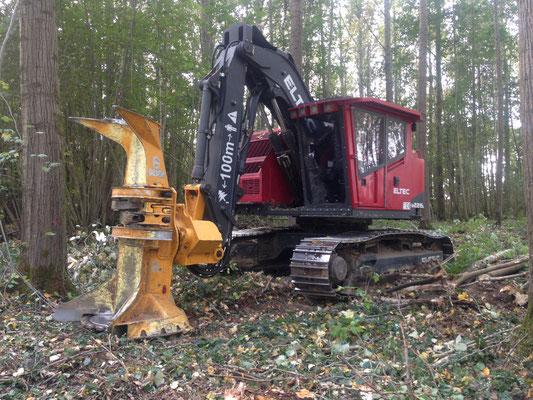 Abattage de bois energie avec Feller buncher Eltec et tète Gilbert 3022L de notre partenaire TPVHS