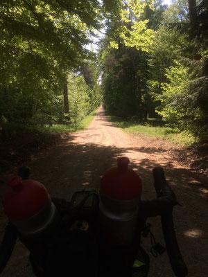 Lion of Flanders zeigt durch den Wald - follow him