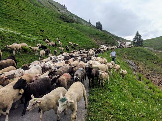 In den Schweizer Alpen gibt es noch Begegnungen der besonderen Art