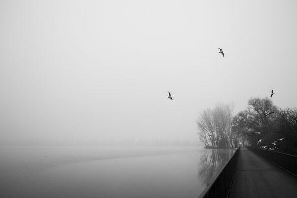 Nebbia sui laghi di Mantova - 2017