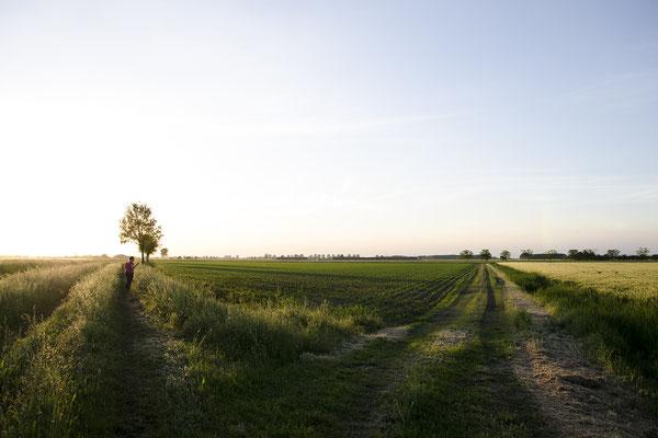 Campagna della bassa Mantovana - Maggio 2019