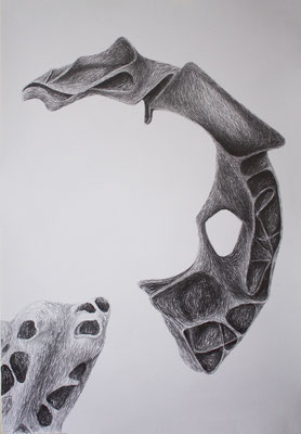 Study of two sculptures - drawing on paper (70 x 100cm)
