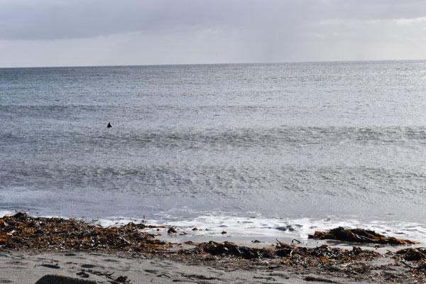 Robben beobachten uns