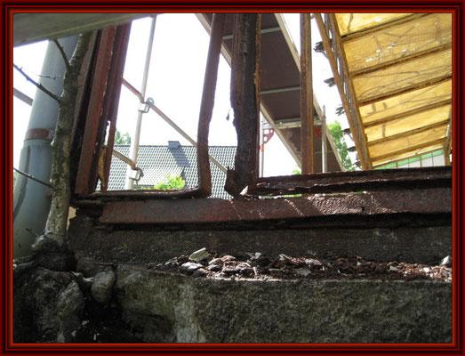 Baumbewuchs aus dem Mauerwerk