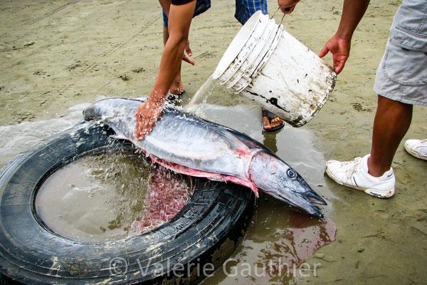Au retour de la pêche à Puerto Lopez