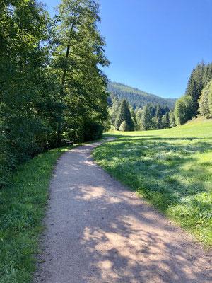 Auf dem Seensteig Richtung Sankenbachsee
