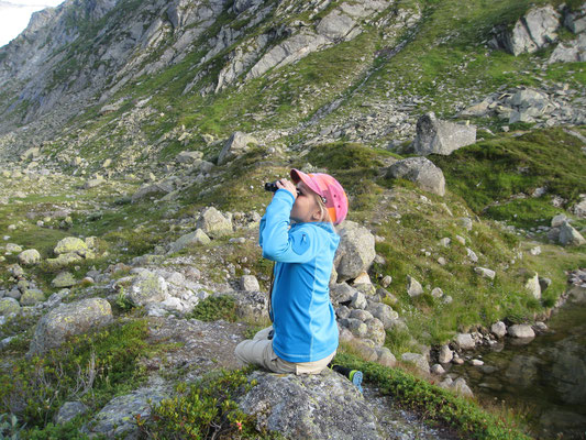 Auf der Suche nach Gämse oder gar Steinböcke, gefunden haben wir Haflinger und Murmeltiere.