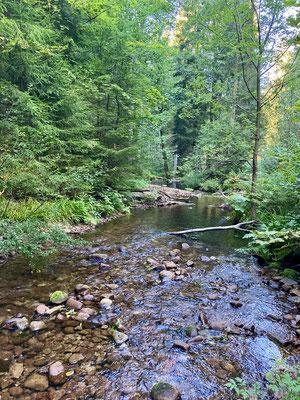 Der Gutellbach fließt direkt am Camp vorbei