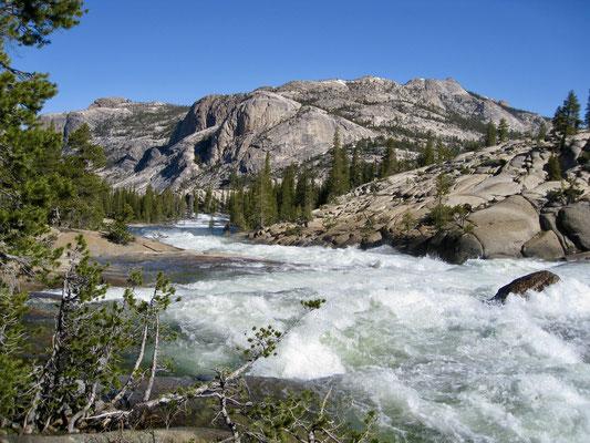 Schon früh erkannten wir wie hoch das Wasser im Tuolumne River war
