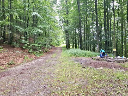 Die Feuerstelle liegt am Forstweg
