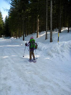 Und los geht es, zuerst einem Forstweg entlang durch den Wald.